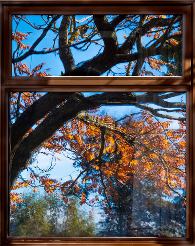 Tree Plant Autumn Branch No People Nature Day Sky Change Transfer Print Tree Trunk Outdoors Plant Part Trunk Leaf Growth Tranquility Clear Sky Window Frame Leaves Yellow Fine Art Photography Street Streetphotography