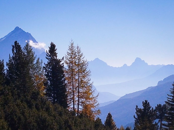 Autumn colours in the Dolomites, Italy Silhouette Backlight Autumn Autumn colors Larch Tree Silhouette Backlight Autumn Tree Mountain Forest Tree Area Pine Tree Pinaceae Clear Sky WoodLand Pine Woodland Mountain Ridge Wilderness Area Fir Tree Mountain Peak Coniferous Tree Spruce Tree Wilderness Rocky Mountains Treetop