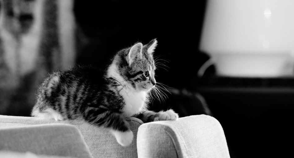 Side view of kitten sitting on chair at home