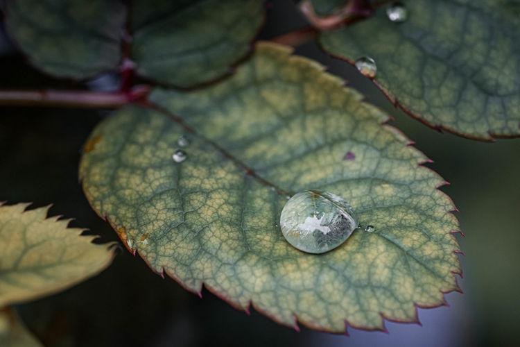 Rain Drop Drop