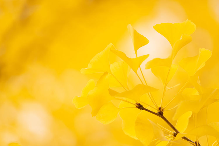 Yellow Plant Flower Flowering Plant Beauty In Nature Vulnerability  Fragility Close-up Freshness Growth Petal Nature No People Sunlight Flower Head Inflorescence Outdoors Orange Color Autumn Sunset Springtime