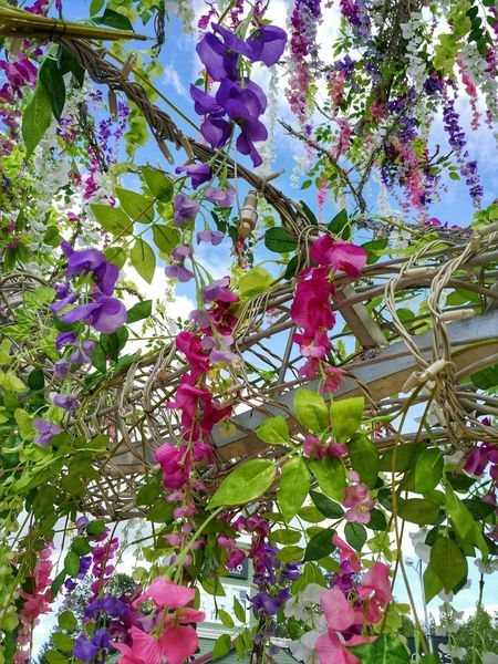 Tree Low Angle View Growth Branch Nature Beauty In Nature Day No People Outdoors Plant Leaf Freshness Flower Fruit Sky Fragility Close-up