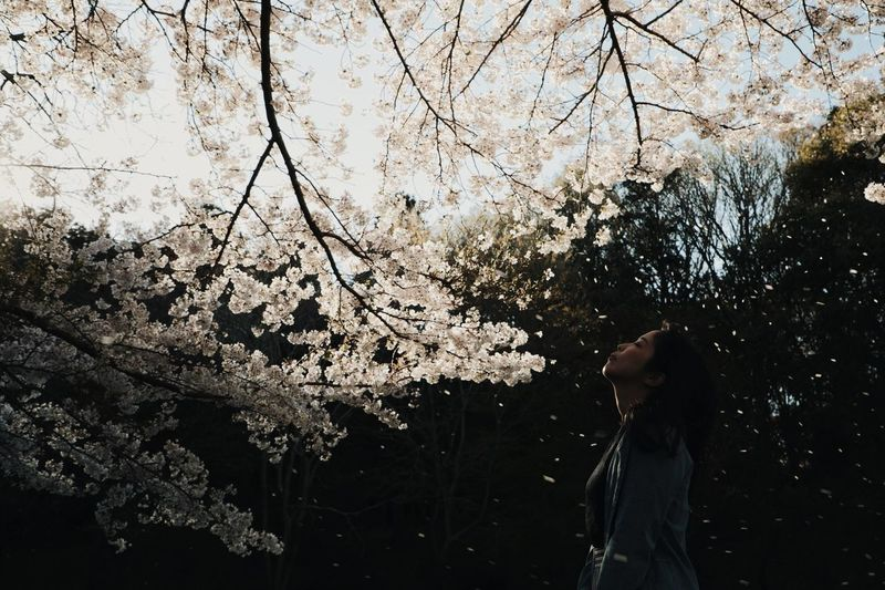 Low angle view of woman standing by cherry blossom tree