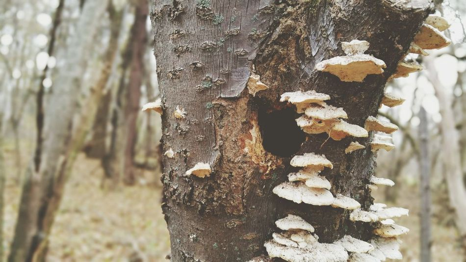 EyeEm Selects Tree Trunk Tree Forest Nature Focus On Foreground Day Outdoors No People Beauty In Nature Autumn Fungi Fungus On Tree