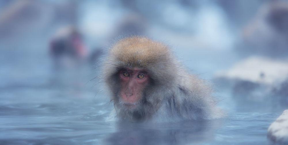 Monkey in a snow