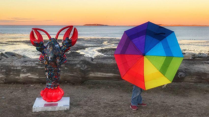 Miles Away Photography Themes Rainbow Umbrella