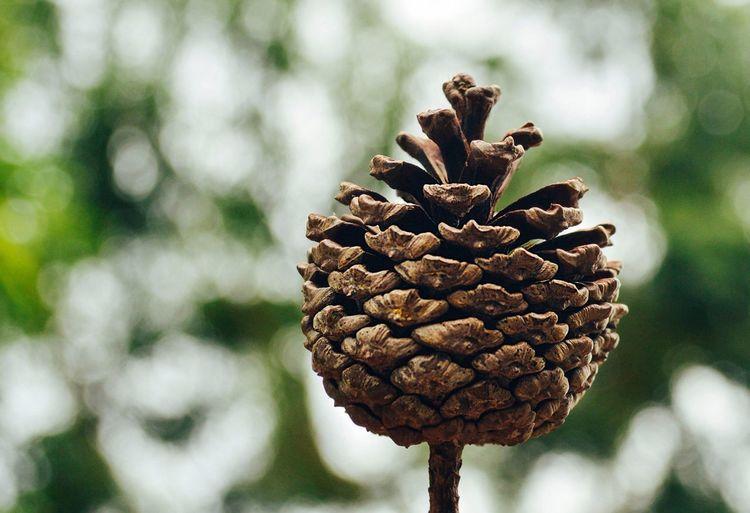 Pinecone 🌲
