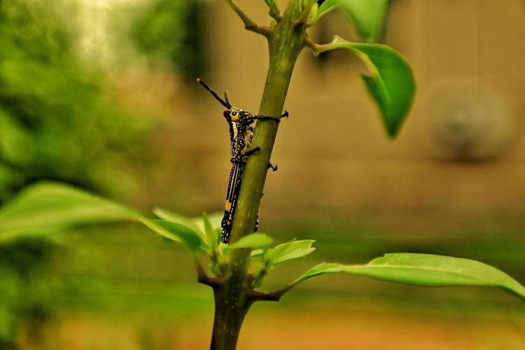Don't lose grip. Insect Nature Animal Wildlife No People One Animal Green Color Plant Close-up Animals In The Wild Animal Themes Outdoors Day Tree Colors Ifechiworks Nigeria EyeEm Best Shots