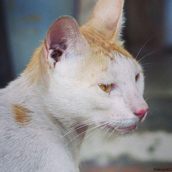 Housecat Nature Malevenneach Maharasthara