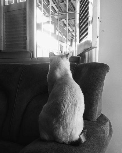 cat shadow Cat
