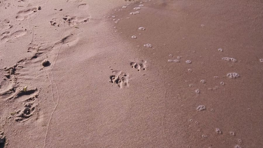 High Angle View Of Footprints And Paw Prints On Sandy Beach