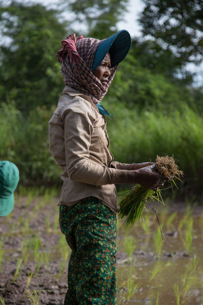 Cambodia Planting Rice Rice Paddy Working Hard Cambodian Casual Clothing Day Field Leisure Activity Lifestyles Nature One Person Outdoors People Planting Rice Real People Rear View Rice Field Standing Tree Warm Clothing Women Women Around The World Workin