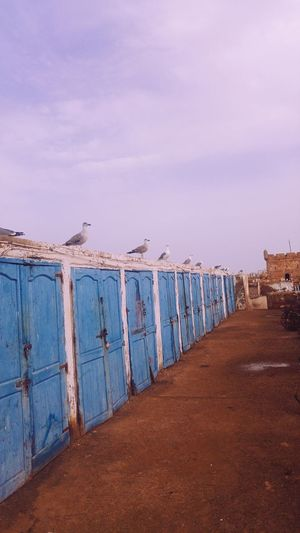 Seagulls perching on beach huts