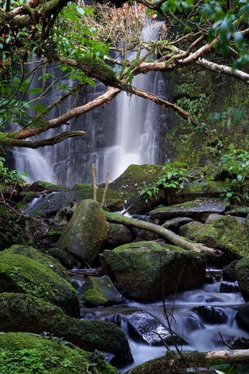 Matai Falls NZ South Island Beauty In Nature Catlins Nz Flowing Water Forest Long Exposure No People Outdoors Rainforest Waterfall