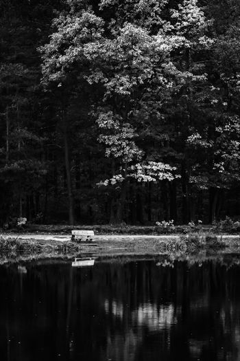 Bnw_friday_eyeemchallenge Bnw_collection Bnwphotography Black And White Blackandwhite Photography Blackandwhite Exceptional Photographs Silhouette EyeEm Nature Lover Eye4photography  Poland Tree Water Lake Forest Reflection Sky