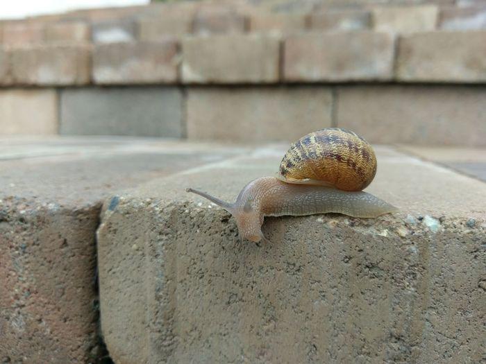 Snail🐌 Slug