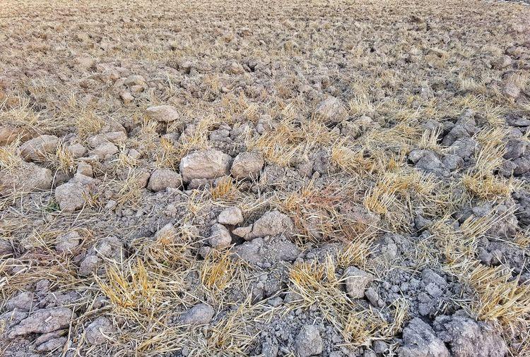 Full frame shot of pebbles on land