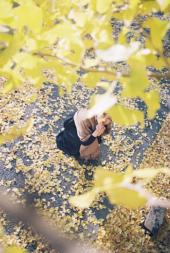 High angle view of man on yellow leaves during autumn