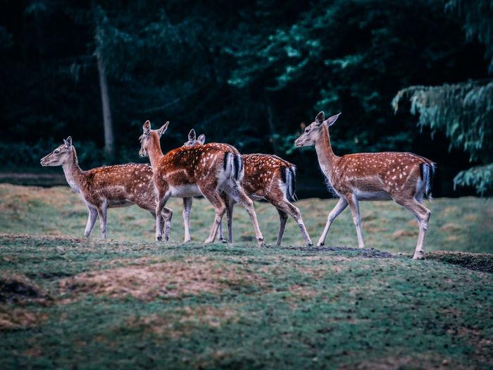 Deer on field in forest