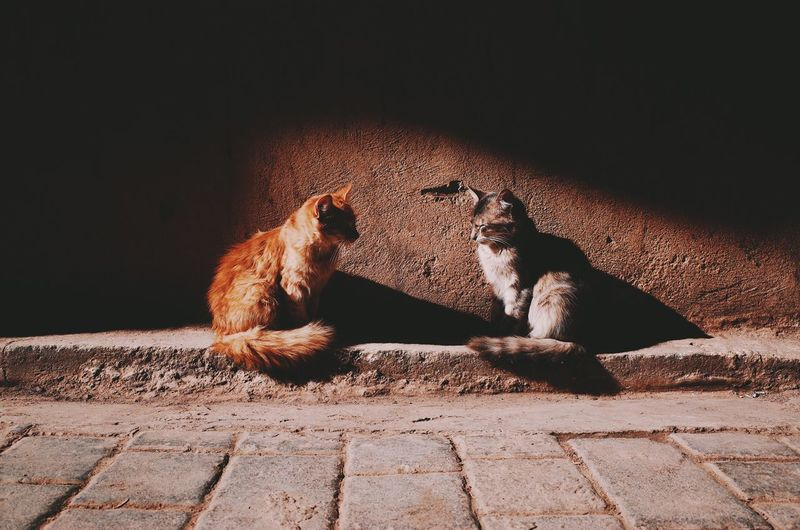 No People Animals In The Wild Animal Themes Cat Outdoors City Animals Street Morocco Lifestyles Travel Couple Seeing The Sights Light And Shadow Friends Love