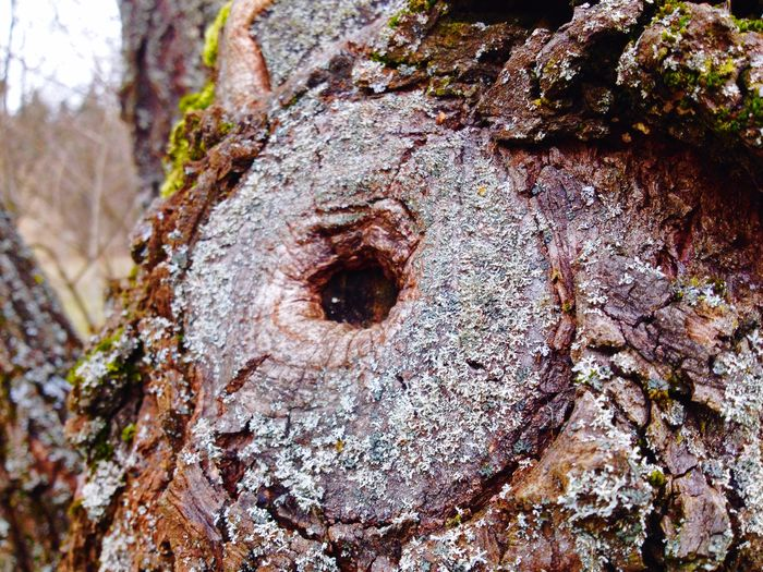 Eyes Tree Eyes Nature Life You See The Tree Eye? It Is Alive