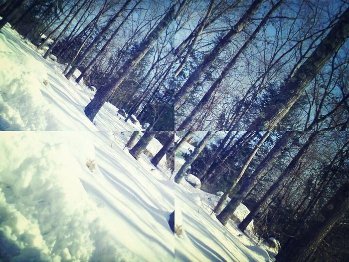 Missing home Snow Enjoying Life Forest