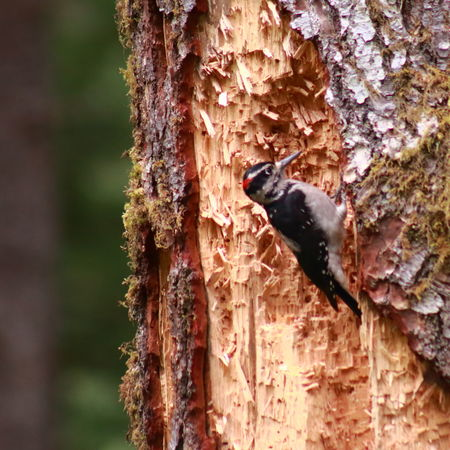 EyeEm Best Shots EyeEm Nature Lover Tree Wood Animal Themes Animal Wildlife Animals In The Wild Bark Bird Close-up Day Eye4photography  Focus On Foreground Log Nature No People One Animal Outdoors Reptile Rough Textured  Tree Tree Trunk Wood - Material Woodpecker