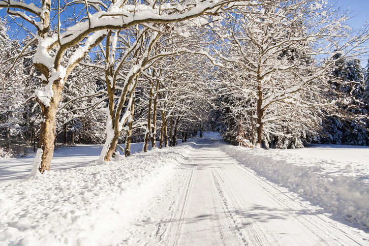 Road Shades Of Winter Slovenia Slovenia Scapes Bare Tree Beauty In Nature Cold Temperature Day Fur Nature No People Outdoors Scenics Sky Snow Tranquility Tree Winter