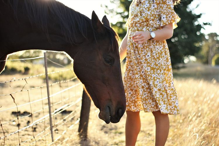 Thoroughbred Girl Young Women Young Woman Dress Backlight Afternoon Sun Afternoon Light Love Care Farm Horse Mane Paddock