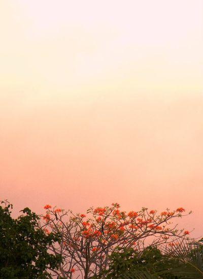Windowsview Imiss Enjoying Nature Tree And Sky