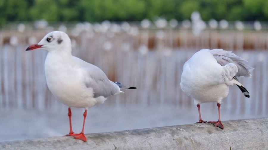 Seagulls perching on a railing