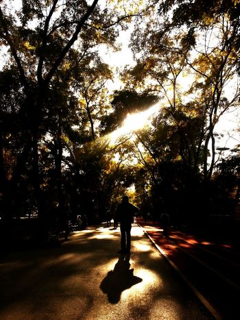 People Watching Walking Around At The Park Sunshine Urban Lifestyle Treeshadow Light And Shadow