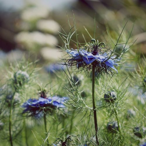 Close-up of purple wildflower