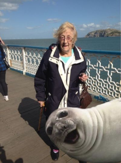 Photo bombing seal Tadaa Community My Mum ♥  Seal Being Silly