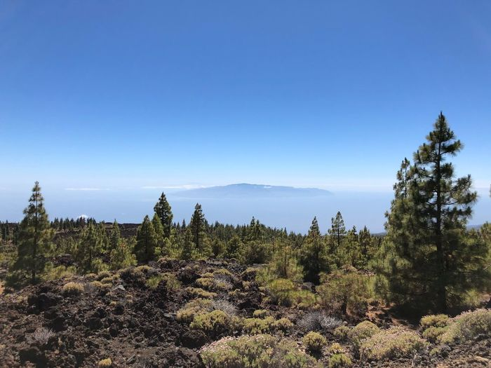 La Gomera on the horizon Plant Sky Tree Growth Tranquility Beauty In Nature Copy Space Clear Sky Scenics - Nature Tranquil Scene Nature Blue Day Land No People Sunlight Sea Water Non-urban Scene Outdoors