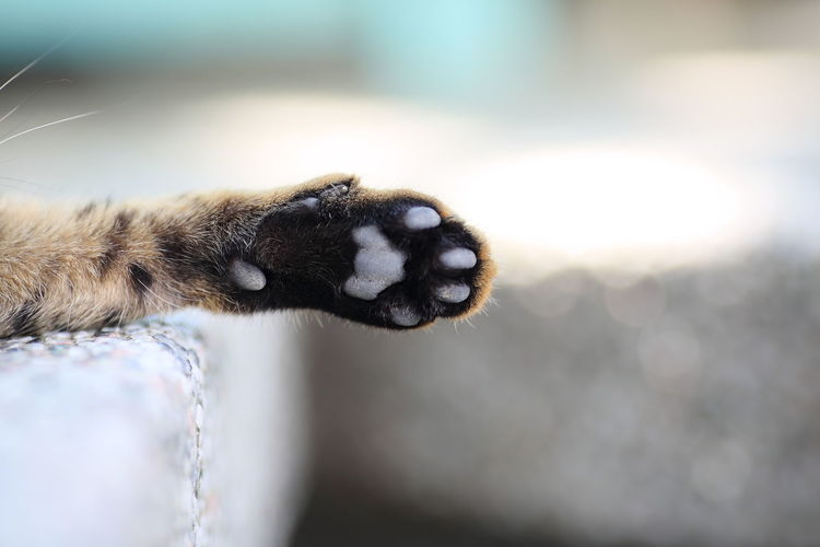 Cropped Image Of Cat Paw On Footpath