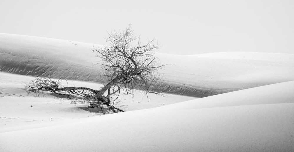 Bare tree on snow covered landscape against sky