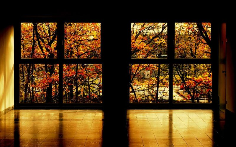 Autumn outside Autumn Colors Autumn Leaves Autumn Light And Shadow Darkness And Light