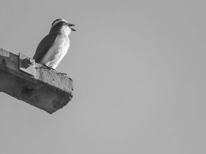 Low angle view of bird perching on wood against sky