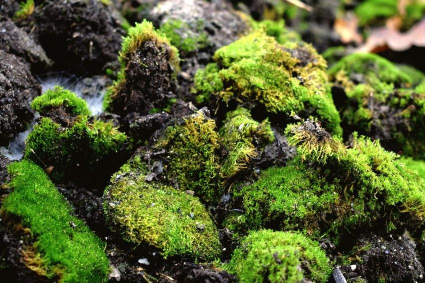 Growth Close-up Green Color No People Nature Outdoors Day Moss