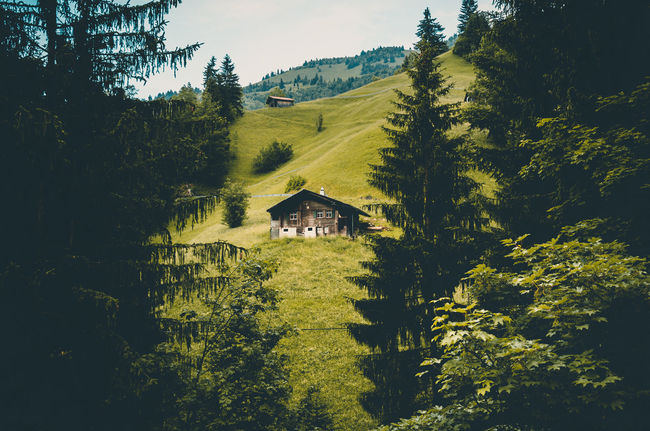 Adelboden Alm Cabin Cabin In The Woods Day Forest Grass Green Color House Landscape Mountain Natur Nature No People Outdoors Pine Tree Swiss Swizerland Travel Tree Landscape_Collection Landscape_photography Mountain Hiking Outdoor Photography Nature Photography