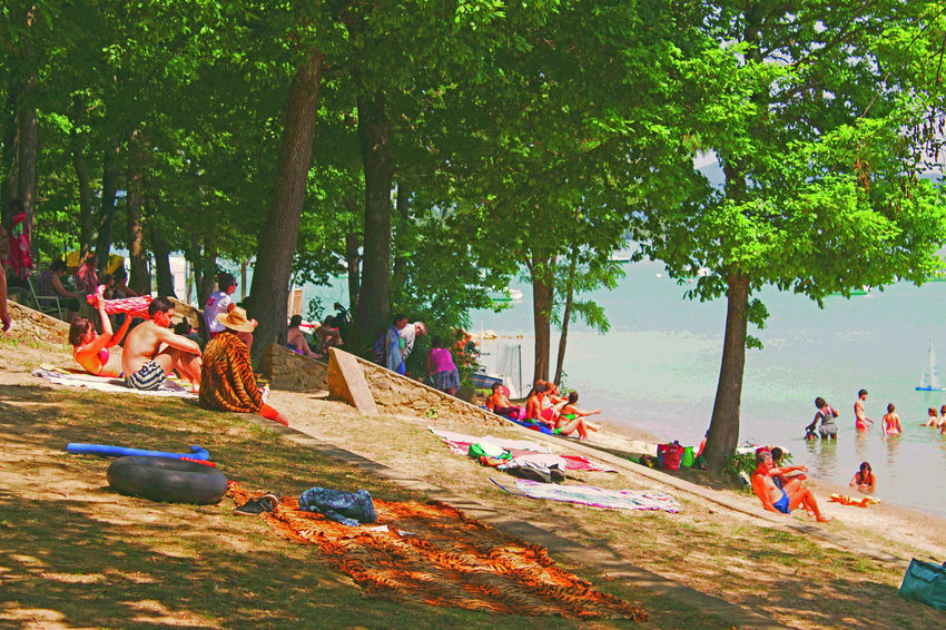 Seurat style Lac Montbel Bathing France Seurat Style Day Group Of People Lac Montbel Lake Leisure Activity Lifestyles Outdoors Real People Relaxation Sunlight Tree Water Human Connection