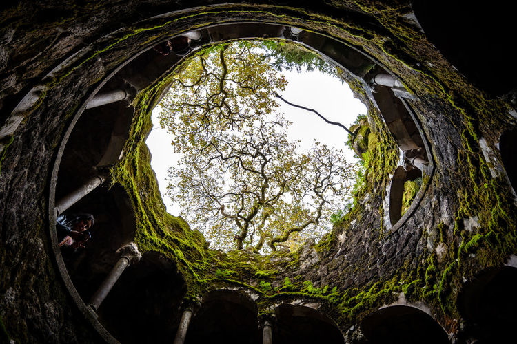 Low angle view of plants seen through hole