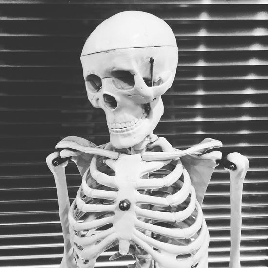 Osteopathy Chiropractor Physiotherapy Skeleton Human Dead Structural Blackandwhite