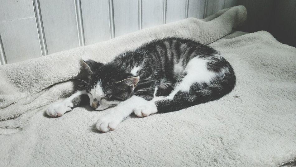Aspal as sleeping beauty .. Relaxing Enjoying Life Cute Pets Pet