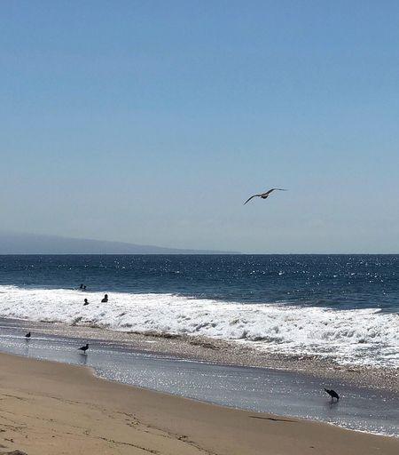Wave Ocean View Ocean Beach Photography Life Is A Beach Beach Sea Water Sky Horizon Over Water Tranquil Scene
