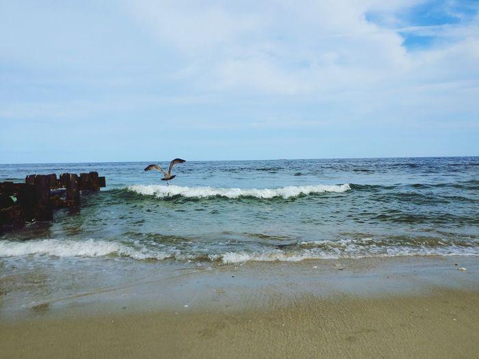 Sea Gull Bird
