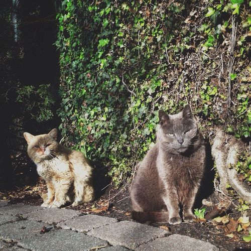 Close up image of two cats