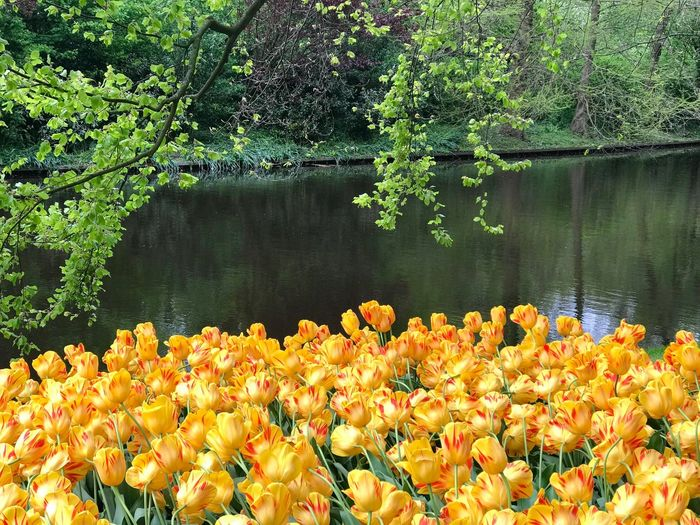 Yellow flowering plants by lake