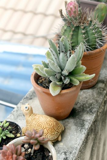 High angle view of succulent potted plants on retaining wall